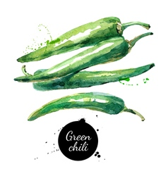 Watercolor hand drawn green chili Isolated eco vector image vector image
