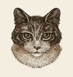 drawn portrait of cute kitten cat animal pet vector image vector image