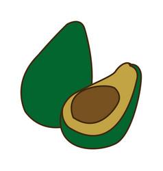 avocado tropical fruit green vitamins vector image