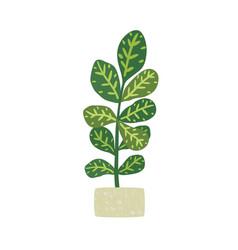 codiaeum variegatum houseplant with potted vector image