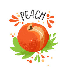 hand draw peach orange ripe vector image