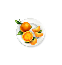 Orange tangerines with leaves on a white plate vector