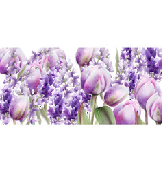 tulips and lavender watercolor spring summer vector image