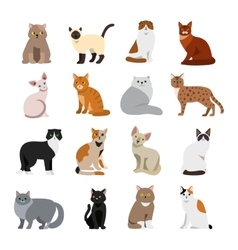 Cat breeds cute pet animal set vector image