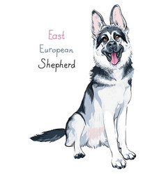 Color sketch dog east european shepherd breed vector
