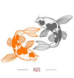 karp koi in hand drawn style vector image