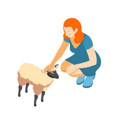 Sheep contact zoo composition vector