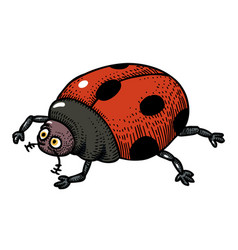 Cartoon image of ladybug vector