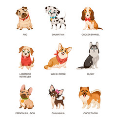Cute dogs furry human friends home animals vector