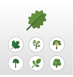 flat icon natural set of alder decoration tree vector image