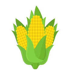 fresh corn on the cob made in cartoon flat style vector image vector image