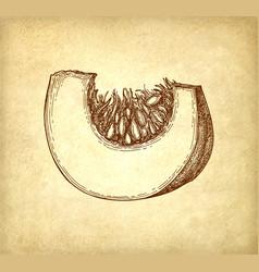 ink sketch of pumpkin piece vector image