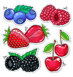 sweet berries vector image