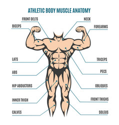 athletic body man figure muscular anatomy vector image