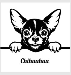 Chihuahua - peeking dogs - - breed face head vector