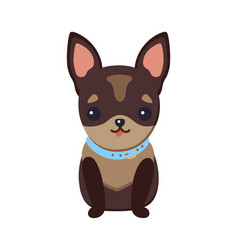 chihuahua puppy with collar vector image
