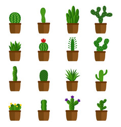 set of cactus in pots vector image