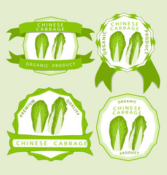 The theme chinese cabbage vector