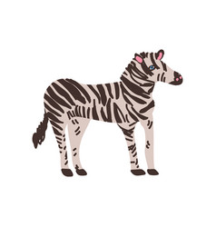 zebra wild exotic african animal vector image