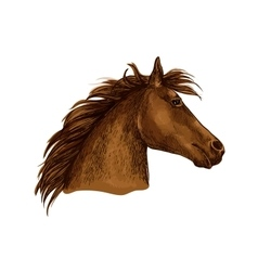 Artistic brown horse head sketch portrait vector