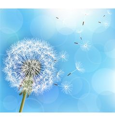 Flower dandelion on light blue background vector