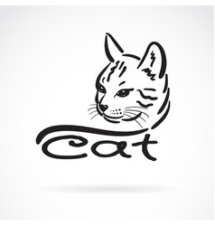 freehand cat head painting on white background vector image