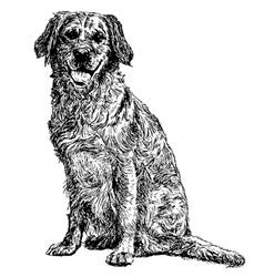Labrador Retriever 10 vector
