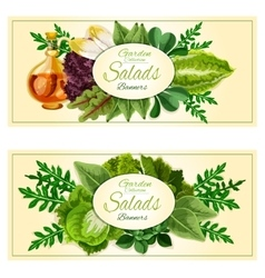 Salad greens and vegetable leaves banners set vector image