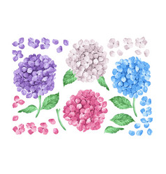 Set collection of lilac hydrangea flowers leaves vector