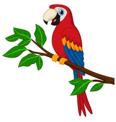 Cartoon red parrot on a branch vector image