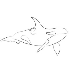 black line killer whale on white background hand vector image