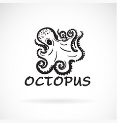 freehand octopus painting on white background sea vector image