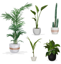 Room plants hand drawn vector image