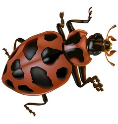 Spotted Lady Beetle vector image