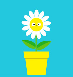 white daisy chamomile with smiling face head cute vector image
