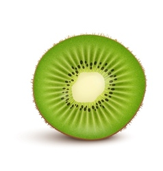 Fresh kiwi fruit Slice vector image