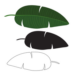 black and white exotic tropical palm leaf isolated vector image