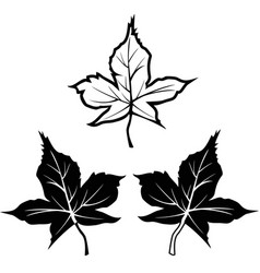 Black maple leaf shape outline contour icons vector