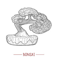 bonsai tree in hand drawn style vector image