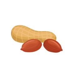 Peanut source of edible oil vector