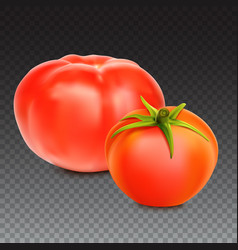 red whole tomatoes isolated on transparent vector image