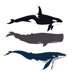 Set of whales in simple realistic style vector