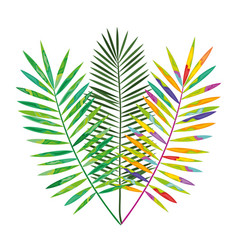 tropical leafs decoration floral vector image