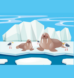 Walrus and seagull on ice vector