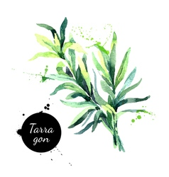 Watercolor hand drawn tarragon Isolated eco vector