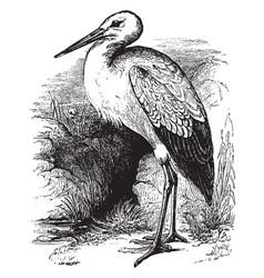White stork vintage vector