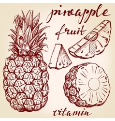 fruit pineapple set hand drawn llustration vector image