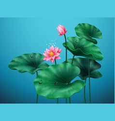 flower lotus with leaves on blue background vector image