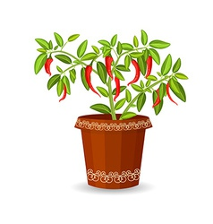 Hot pepper in a flower pot vector