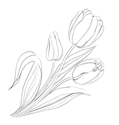 Hand drawn tulips vector image